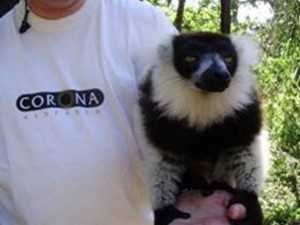 kevin and lemur (2)
